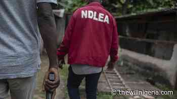 NDLEA Intercepts 1500kgs Illicit Drugs In Zamfara - thewillnigeria