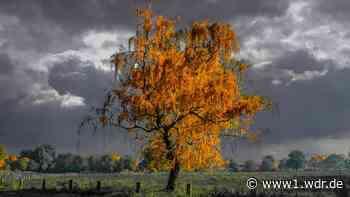 Nasses Herbstlaub statt goldener Sonne - so wird das Wetter in NRW