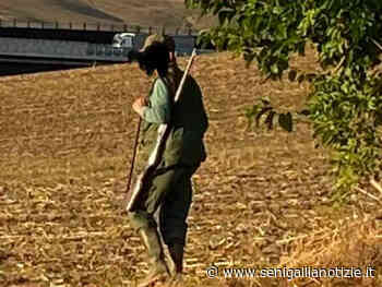 Senigallia, pallini sparati da un cacciatore raggiungono un'abitazione - Senigallia Notizie