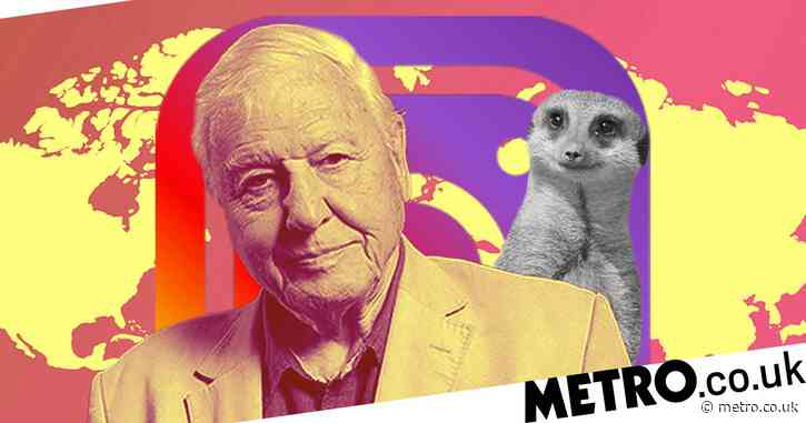 Thank God Sir David Attenborough beat Jennifer Aniston to Instagram record, and not some random influencer