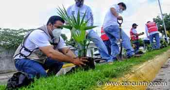 Realizan trabajos de reforestación en Isla Mujeres - Cancún Mio