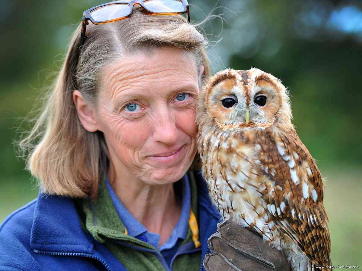 Shropshire Falconry determined to survive the pandemic and continue looking after one-of-a-kind birds - shropshirestar.com