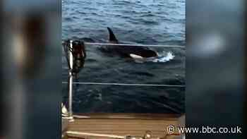 'My yacht was attacked by killer whales'