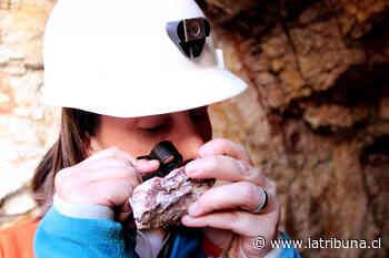 Seremi de minería confirma que existen más sondeos que buscan vetas de tierras raras - Diario La Tribuna