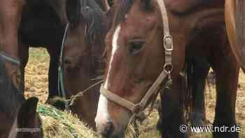 Pferde in Wolgast mit Messerstichen verletzt - NDR.de