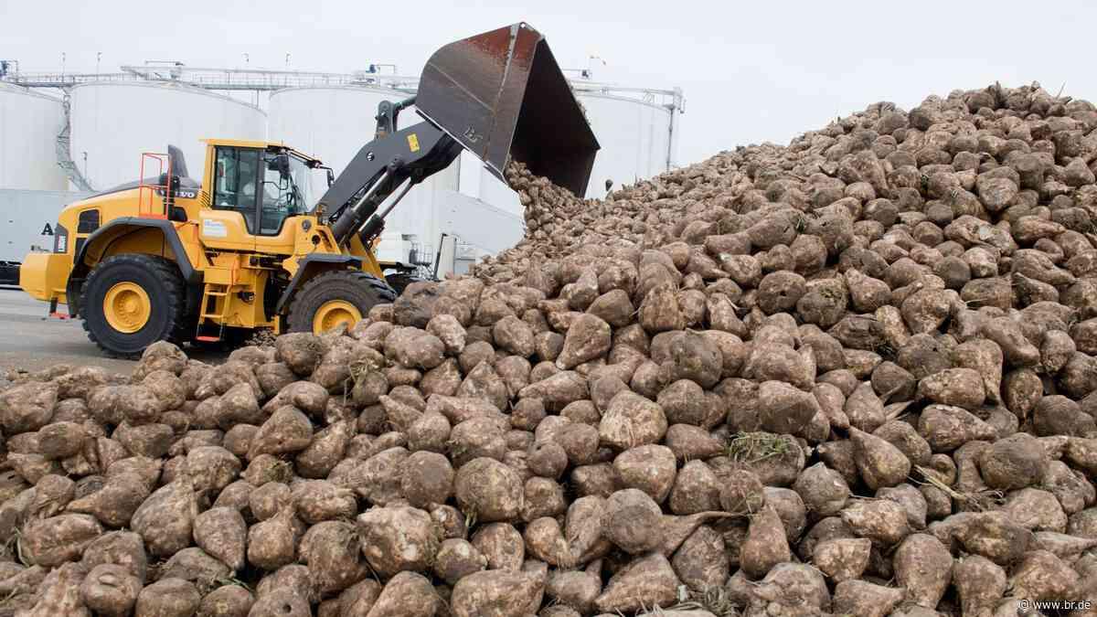 Zuckerrüben-Kampagne 2020: Produktion in Ochsenfurt startet - BR24