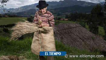 María Lilia, la guardiana de semillas nativas - El Tiempo