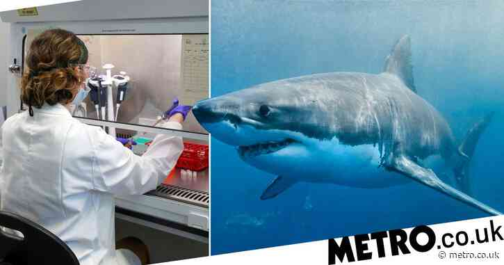 500,000 sharks could be killed for use in coronavirus vaccine