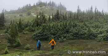 Saving Western Canada's only endangered tree