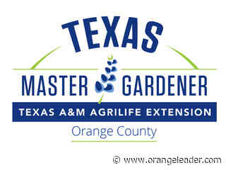 Master Gardener's: Pruning improves plant's life and landscape appeal - Orange Leader - Orange Leader