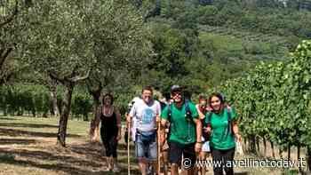 Irpinia Express fa rotta nella terra del Fiano: trekking e vendemmia a Lapio - AvellinoToday