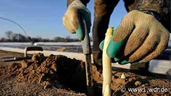 Bornheimer Spargelbauer haben Angst um Ernte - WDR Nachrichten