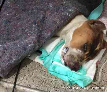 Educadora AM - MP de Limeira denuncia dono do cão Titan, morto após ser queimado vivo - Educadora