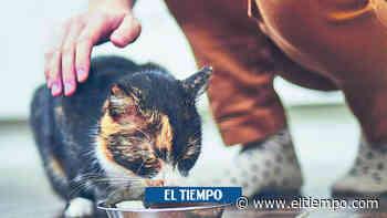 Mujer murió tras ser mordida por su gato en Neiva - El Tiempo