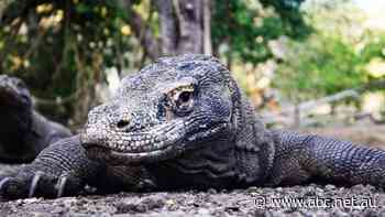 Indonesia's Jurassic Park-inspired tourist attraction worries Komodo dragon fans