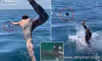Man swims with 'basking shark' then panics it may be a Great White