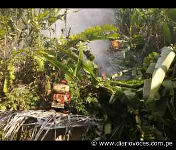 Incendio forestal afecta cultivos y animales silvestres cerca a Saposoa - Diario Voces