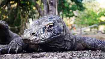 Jurassic Park-inspired Komodo dragon attraction in Indonesia worries environmentalists