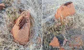 Yowie hunters claim huge poo on termite mound is PROOF that the mythical beast exists in the bush