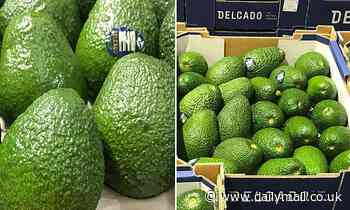 New avocado that is 'tastier than Hass' is set to hit Australian supermarkets
