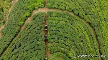 From tea fields to university in Sri Lanka