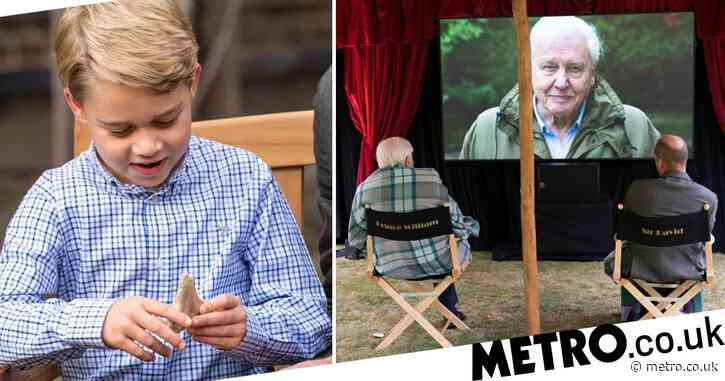 Malta demands return of rare fossil David Attenborough gave to Prince George