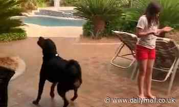 Rottweiler catches raindrops as it enjoys first downpour for months in Las Vegas suburb