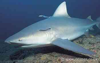 Pregnant woman saves husband after shark attack