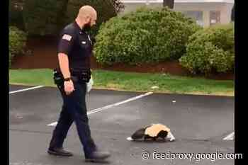 "Massachusetts Officer Rescues Trapped Skunk Without Getting ""Skunked"""