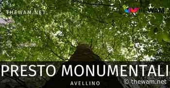 Avellino, alberi monumentali: ecco quali saranno riconosciuti a breve - The Wam