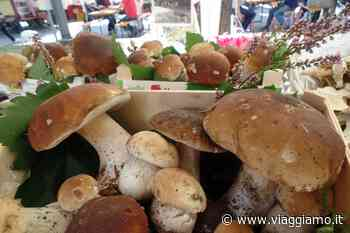 Festa del fungo porcino, Borgo Val di Taro: evento tipico | Viaggiamo - Viaggiamo