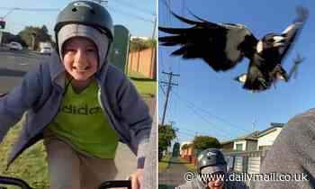 Boy swooped by a magpie returns to face the VERY aggressive bird
