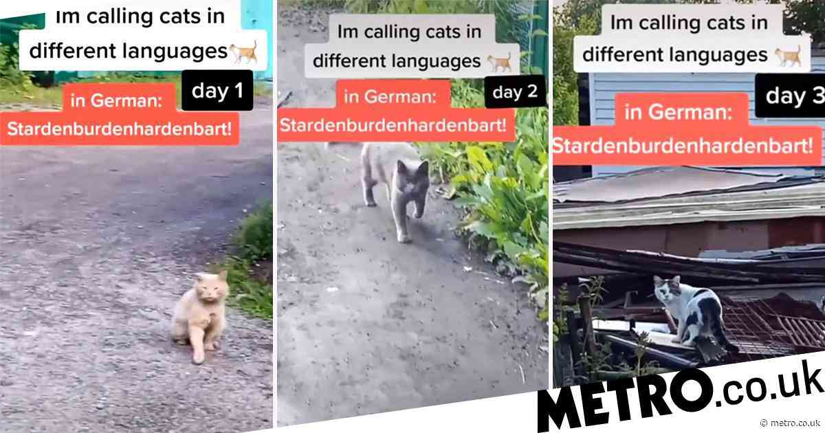 Man calls over cats in different languages – proving all cats are secretly German