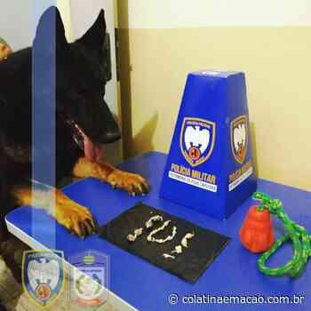 Cão policial Jayson auxilia PM a encontrar drogas em Ecoporanga - Colatina em Ação