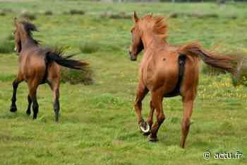 Pays Basque. Un cheval retrouvé mutilé à Cambo-les-Bains - actu.fr