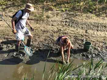 Dierenvrienden redden vissen uit modderpoel