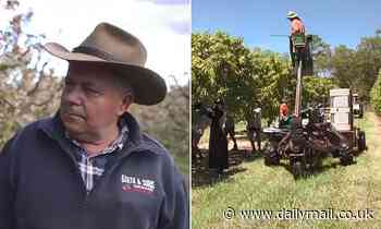 Desperate farmers offer out-of-work Australians extraordinary money to pick fruit