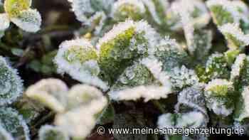 Welche Pflanzen können auf dem Balkon überwintern? – Die Top 6 winterharten Kübelpflanzen