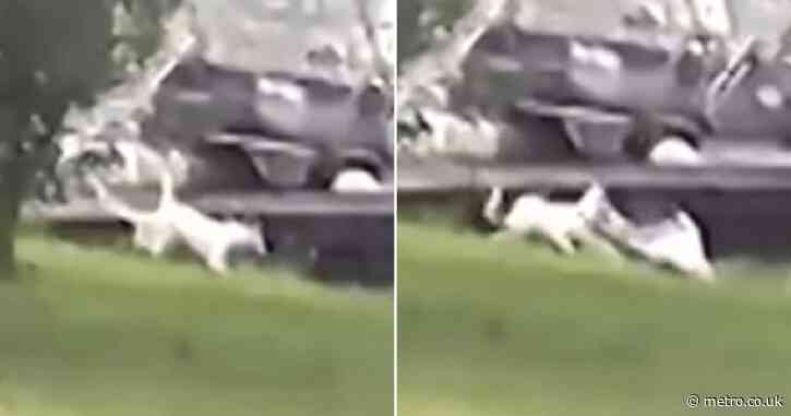 Awful moment huge alligator snatched and ate puppy as she played in her garden