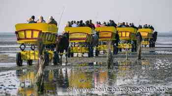 Schock im Wattenmeer: Reiter machen Ausflug – dann passiert Dramatisches