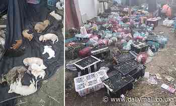 5,000 pets including rabbits, cats and dogs are found dead at a depot in China