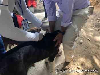 Activan protocolos para evitar propagación de rabia humana en Neiva - Alerta Tolima