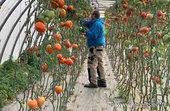 Moissy-Cramayel : les légumes de la ferme urbaine distribués aux habitants - Le Parisien