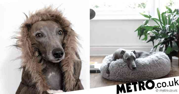 Aldi launches adorable winter range for pets – including cosy parker coat