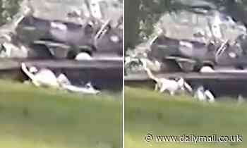 Giant alligator snatches and eats a six-month-old puppy playing in a Florida backyard