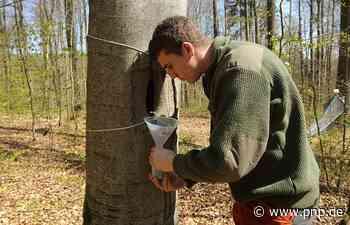 So viel Totholz braucht ein artenreicher Wald - Passauer Neue Presse