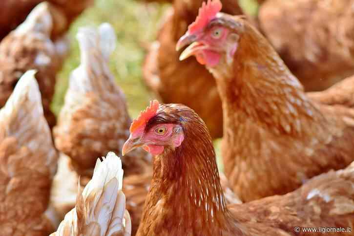 Allarme Ue: ''Possibile ritorno dell'influenza Aviaria''