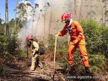Incêndio atinge área de vegetação em Baixo Guandu - A Gazeta ES