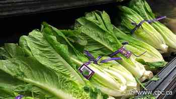CFIA tightens restrictions on romaine lettuce imports following E. coli outbreaks