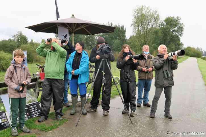 """Natuurpunt over Scheldeoevers: """"Hoogbouwkantoren en mega-windturbines jagen trekvogels de dood in"""""""